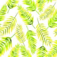palm leaves blog