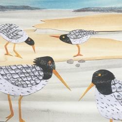 seagulls blog