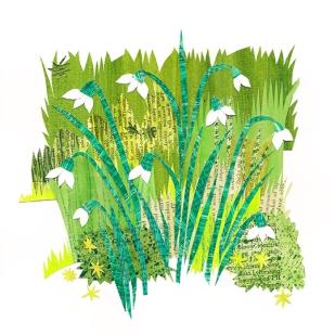 Hedgerow Snowdrops
